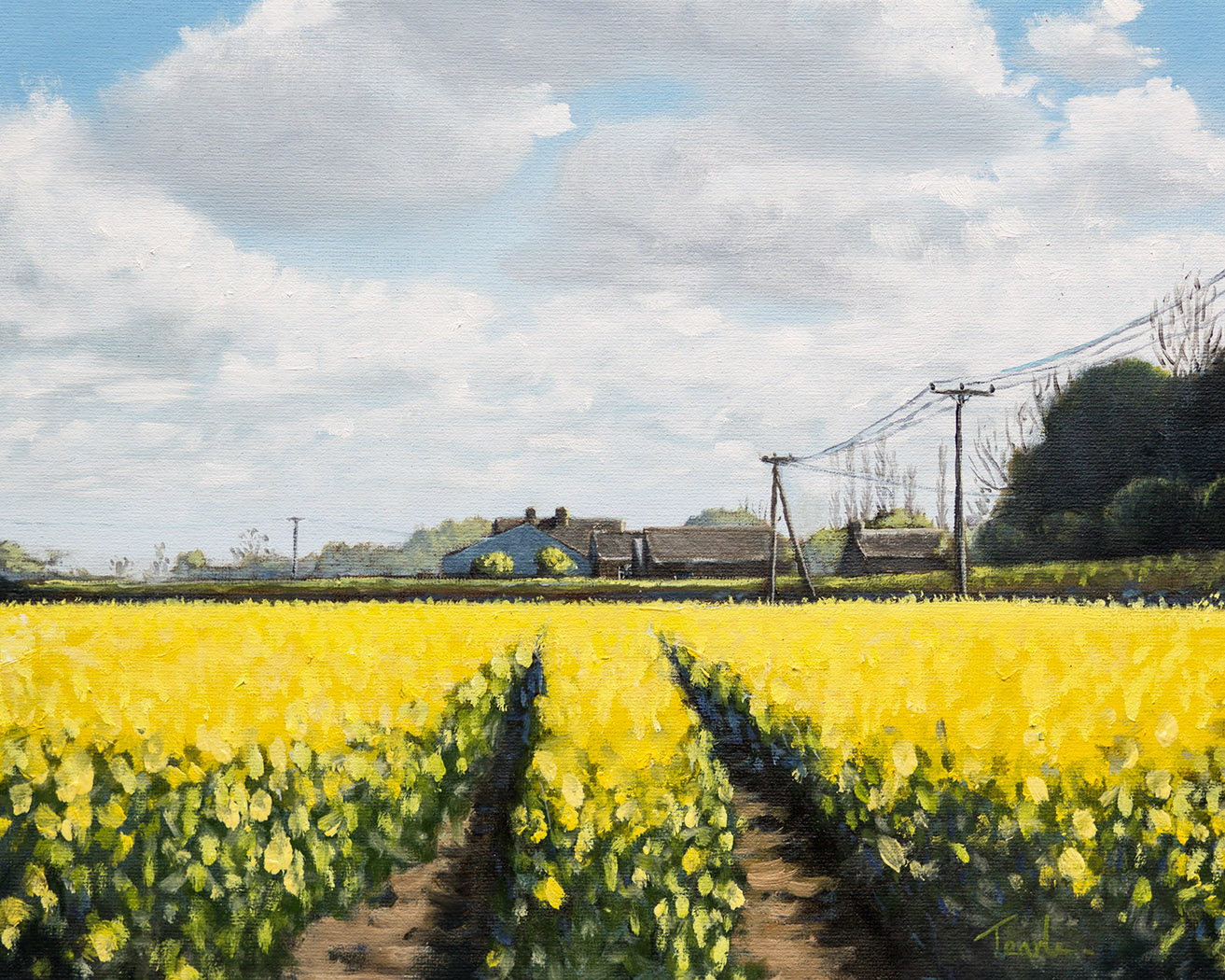 Rapeseed on Mill Rd., Maxey - Nick Tearle Fenland Artist